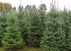 Produktion og salg af juletræer